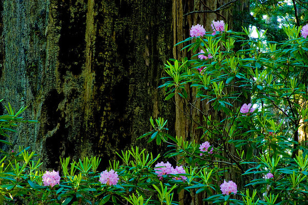 redwood national park - 2008